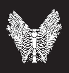 Hand drawn of human ribs with wings isolated vector