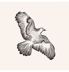 sketch bird Hand drawn vector image