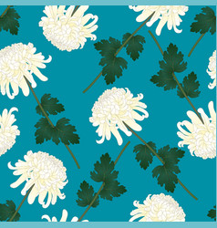 white chrysanthemum flower on indigo blue vector image