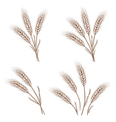 hand drawn wheat ears and sheaves vector image vector image