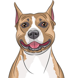 american staffordshire terrier b vector image