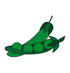 Fresh healthy vegetable icon vector