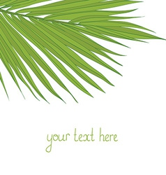 PalmLeaves9 vector