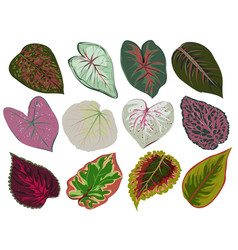 set of patterned red and green leaves vector image