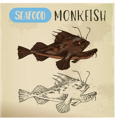 monkfish or sea-devil fishing-frog or fish sketch vector image