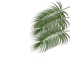 Three tropical palm leaves isolated on white vector