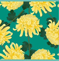 yellow chrysanthemum flower on green teal vector image