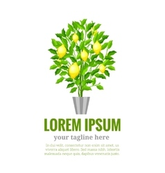 Lemon tree Citrus tree Garden fruit Flat style vector image