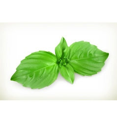 Basil leaves vector