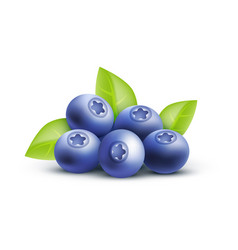Blueberry icon isolated on vector