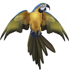 Macaw vector image