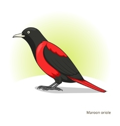 Maroon oriole bird educational game vector image