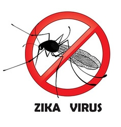 No zika mosquito gnat insect sign vector