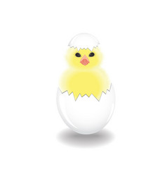 the newborn cute chicken on white background vector image