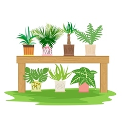 gardening table with potted herbs vector image