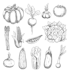 Healthful fresh vegetables engraving sketches vector