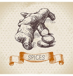 Kitchen herbs and spices Vintage background vector