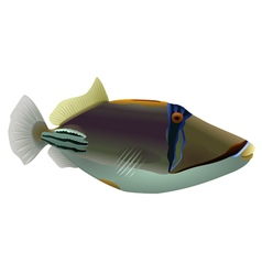 Picasso fish isolated vector image