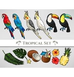 Tropical set vector image