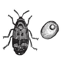 Beetle vintage engraving vector