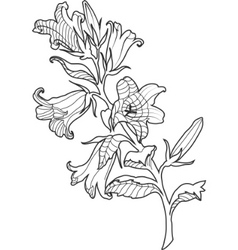 cornflower engraved vector image