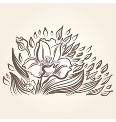 Drawing of beautiful narcissus flower vector image