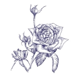 Rose branch hand drawn llustration vector
