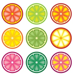 Colorful citrus slices vector