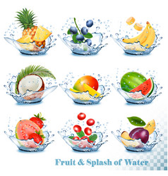 Big collection of fruit in a water splash vector