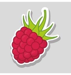 blackberry icon design vector image