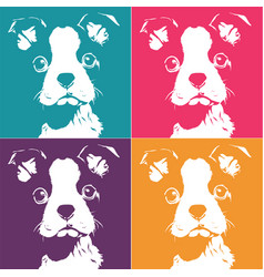 Boston terrior pop up vector