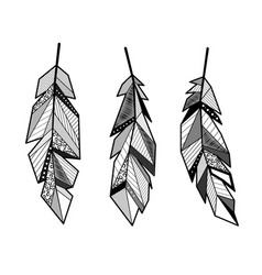 feathers lines set vector image