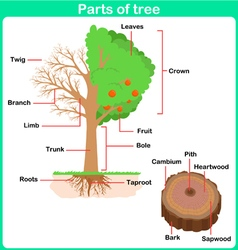 Leaning Parts of tree for kids Worksheet vector image