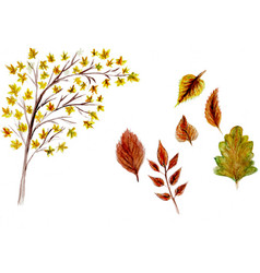 tree autumn watercolor vector image