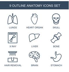 9 anatomy icons vector