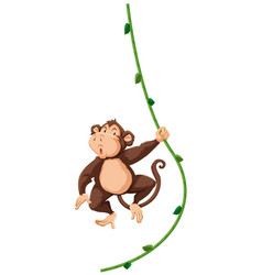 a monkey hanging on vine vector image