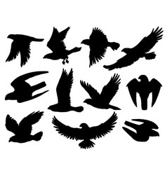 eagle bird black silhouettes falcon and hawk vector image