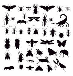 insect silhouette vector image