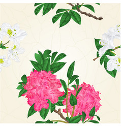 seamless texture flowers pink and white vector image