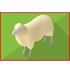 Sheep isometric flat 3d vector image vector image