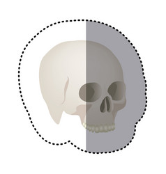 Sticker side view realistic human skull icon vector