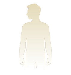 blank male body template vector image