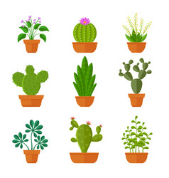 Decorative cactuses with flowers and home plant in vector