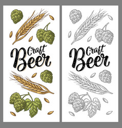 Ears of barley leaves and cones of hops engraving vector