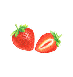 Watercolor hand drawn strawberry vector