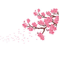 branches with pink cherry blossoms sakura the vector image