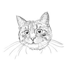 cute kitty head hand drawn sketch vector image
