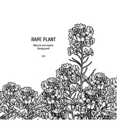 hand drawn background with rape plant vintage vector image