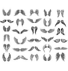 thirty pairs wings graphic vector image