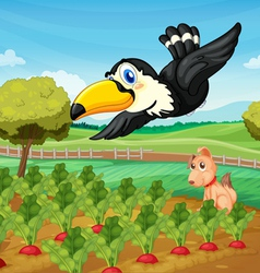 Toucan over farm vector